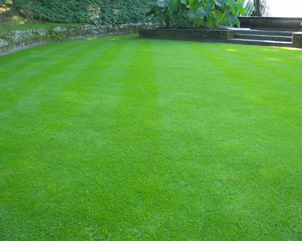 Le secret d'une belle pelouse, la fertilisation équilibrée