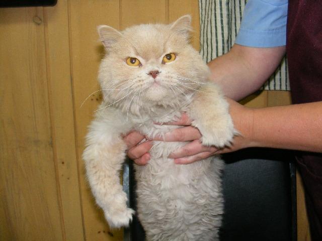 Un chat de l'Inspecteur Canin; Bon pour le coeur ?