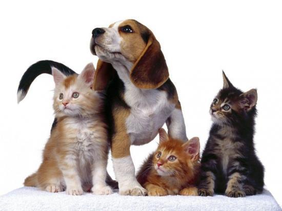Sondage Animaux domestiques 2011