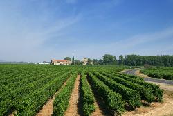 Etape œnologique sur le trajet des vacances : découvrez les vignerons indépendants