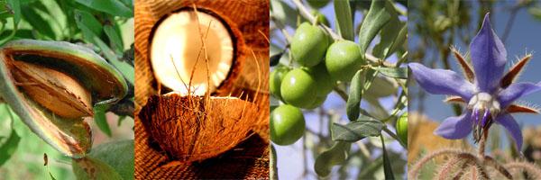 Sublimer sa beauté avec les huiles végétales bio