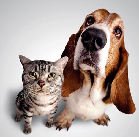 Peut-on confier nos animaux sans crainte ?