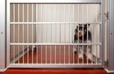 Quel est le prix d'un chien à la spa ?