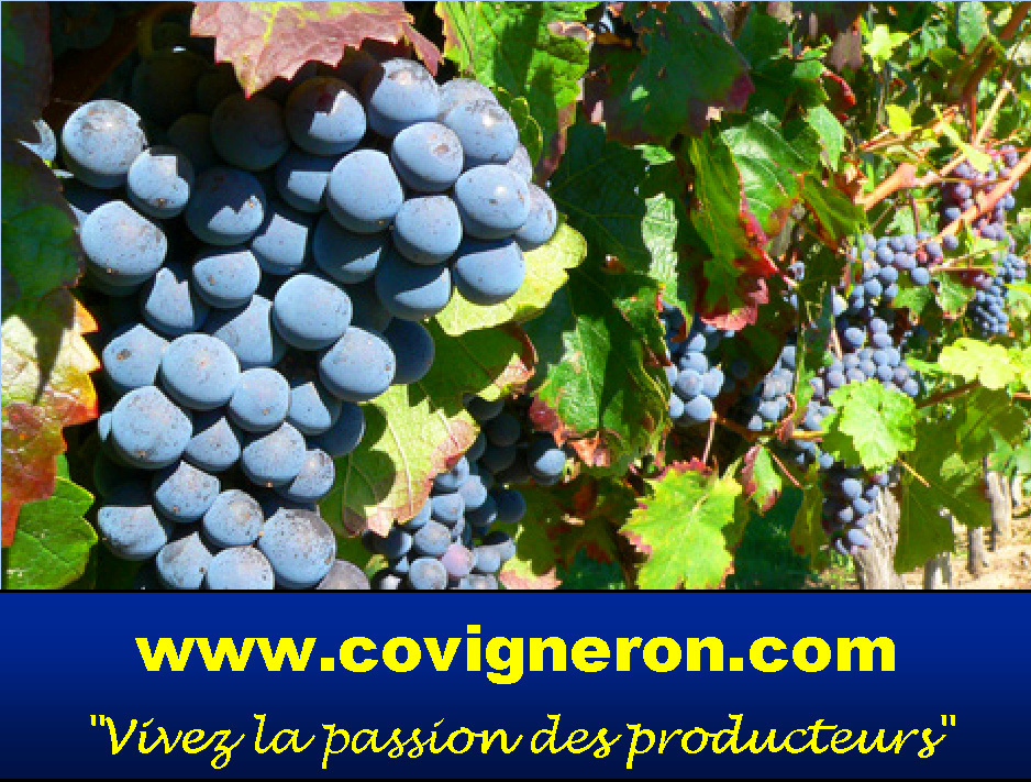 Covigneron.com, les covignerons 2012 réceptionneront leurs propres bouteilles de vin.