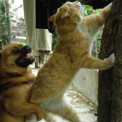 Comment faire cohabiter un chien et un chat ?