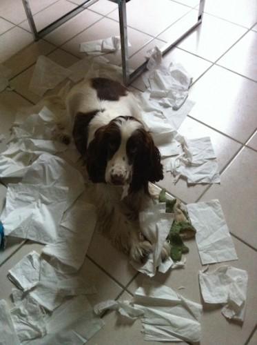 Mon chien détruit tout en mon absence…