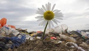 L'étude de la pollution des sols pour bâtir
