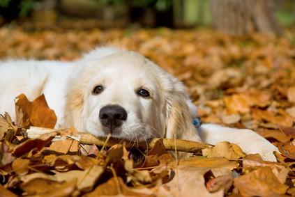 Pourquoi ne devez-vous jamais crier sur votre chien?