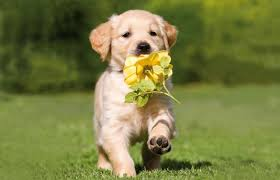 Maîtrisez les aboiements excessifs de votre chien !