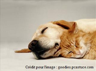 L'utilité des phéromones dans l'éducation de notre chien ou de notre chat