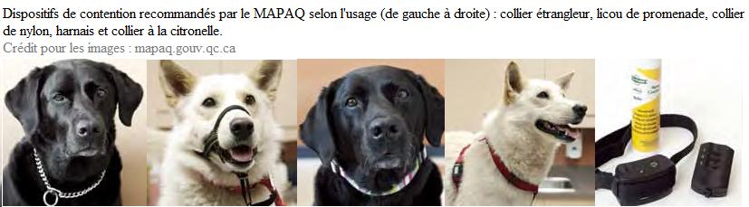 Types de colliers (ou autres dispositifs) pour chiens : s'orienter selon les recommandations du Ministère