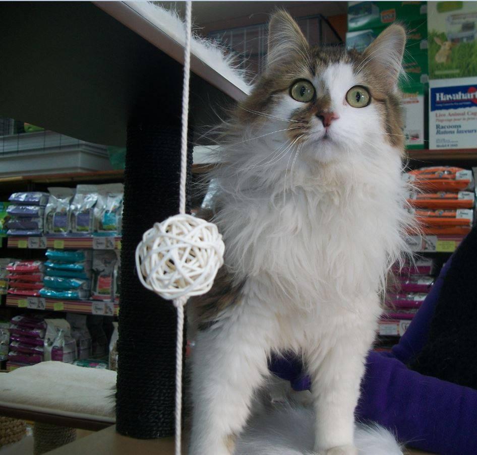Dégriffer son chat : une intervention légale avec des implications morales