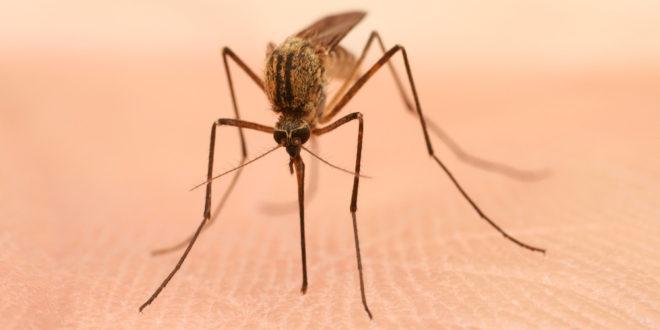 Attention aux insectes piqueurs