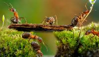 Ces insectes qui hibernent en hiver