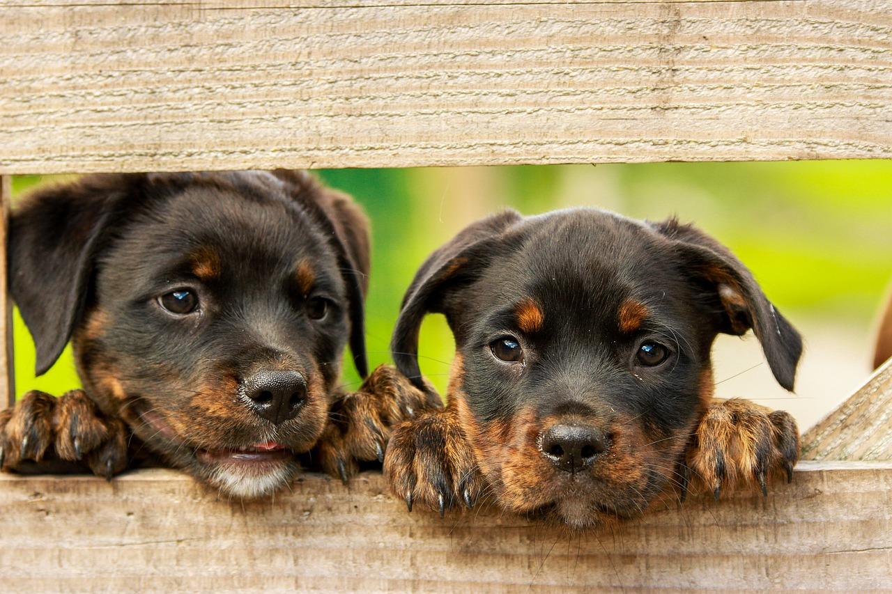 La meilleure race de chien en fonction de votre personnalité