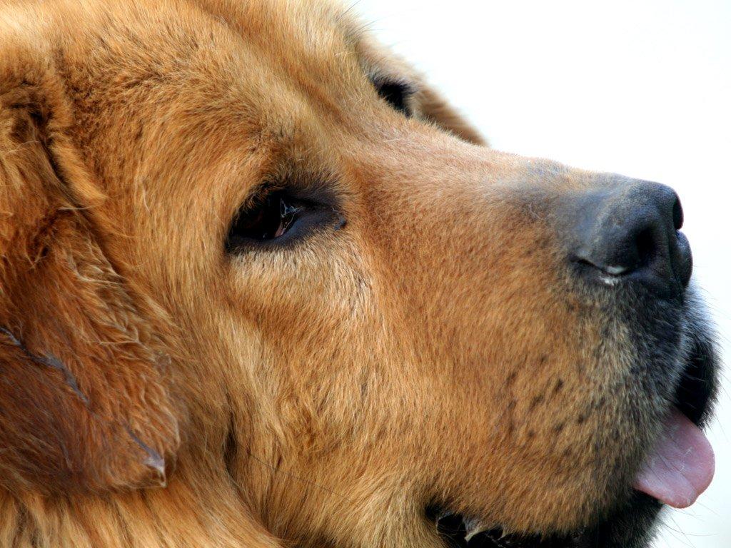 5 conseils pour choisir la bonne assurance pour votre chien
