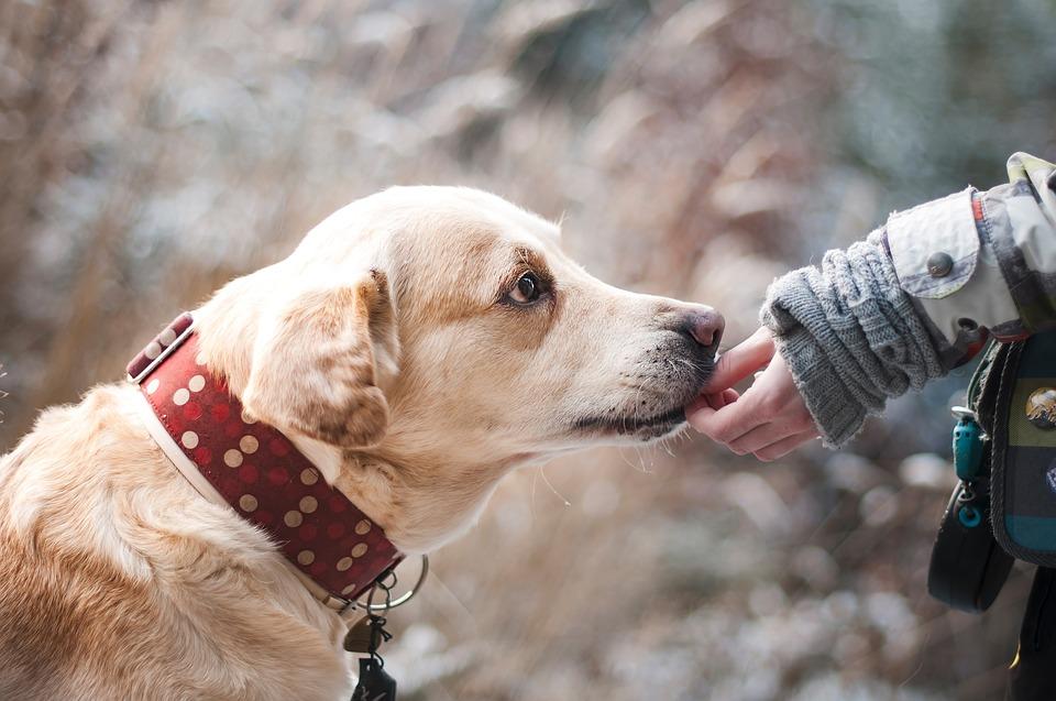 4 conseils sur comment choisir son chien