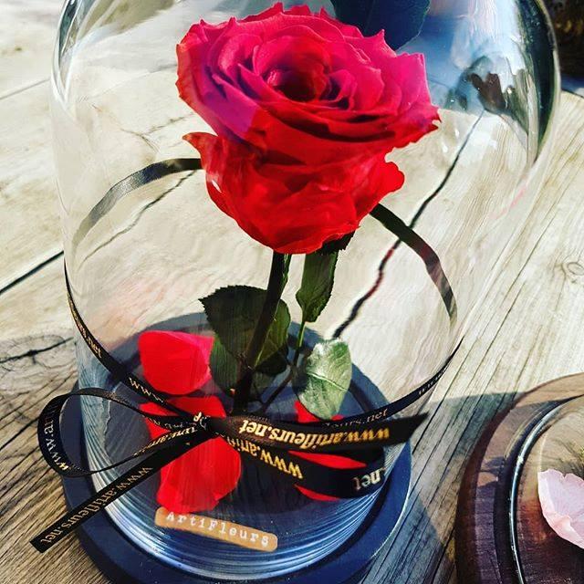 La mode de la rose éternelle
