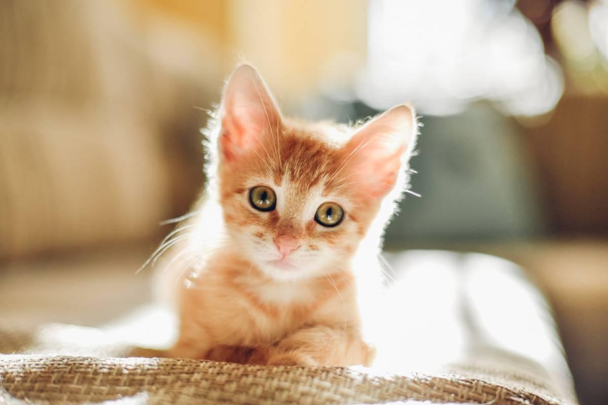 Bien préparer l'arrivée d'un chat chez vous !