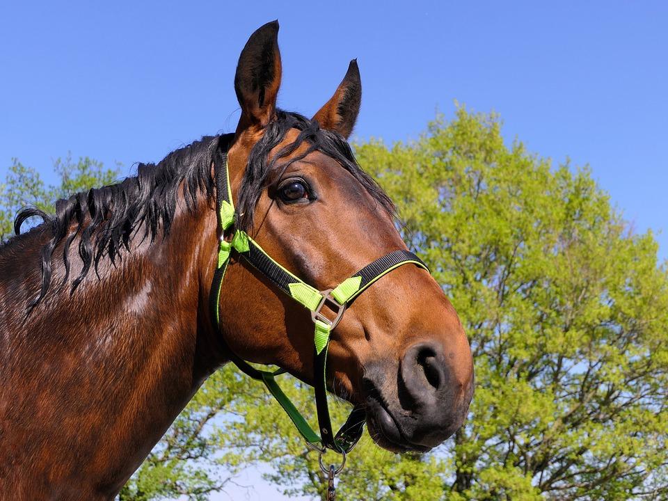 Le licol éthologique pour l'équitation, un équipement utile
