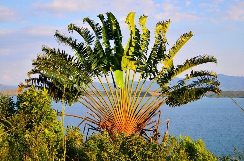La flore de Madagascar : Une richesse endémique et incroyable