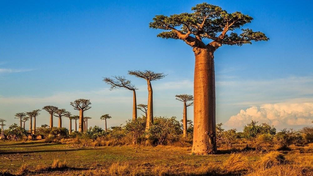 Passer des moments inoubliables sur les littoraux de Madagascar