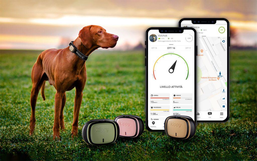 Créer une routine pour votre chien