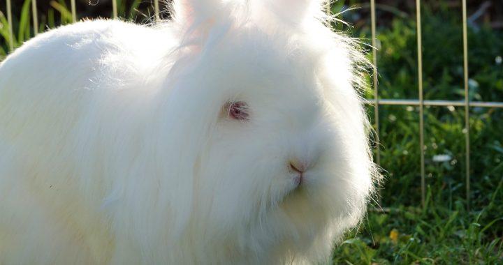 Tout savoir sur le monde des lapins