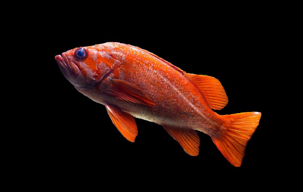 poisson par aquarium