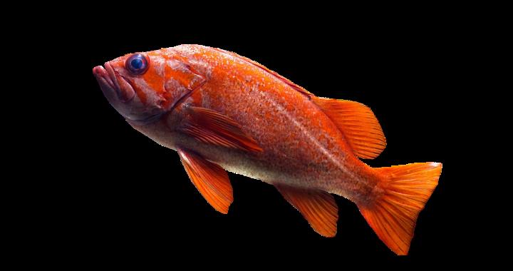 Combien de poissons peut accueillir un aquarium ?