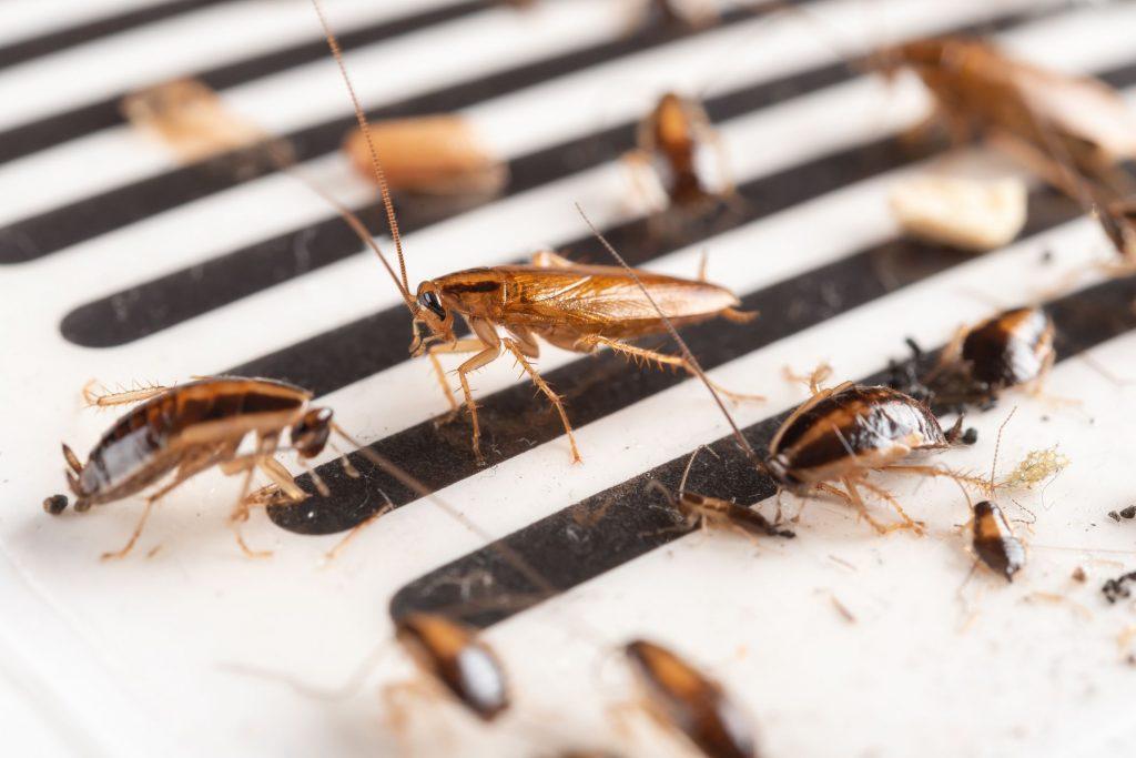 parasites et insectes maison