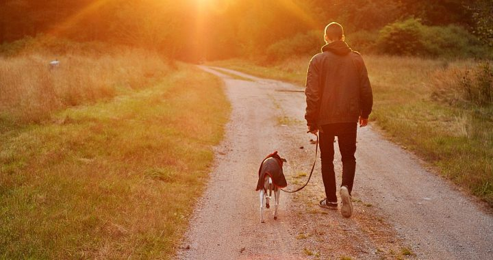 Qu'est-ce qu'un chien peut apporter à l'homme?