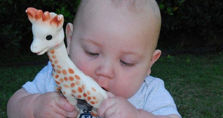 Sophie la girafe s'offre un salon intéractif
