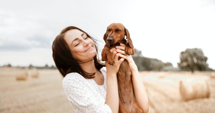 Top 10 des meilleurs chiens de compagnie