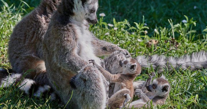 3 bonnes raisons de voyager à Madagascar lors de ses prochaines vacances