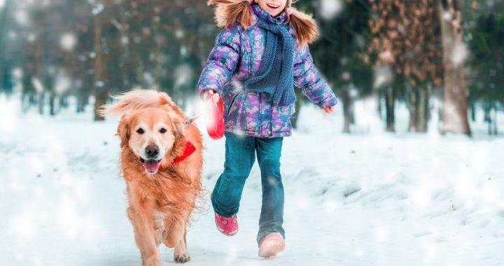Quels sont les bienfaits des animaux de compagnie sur notre santé?