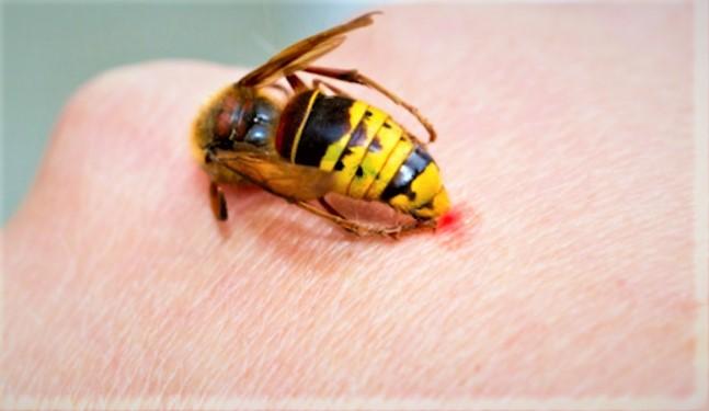 Avis controversés entre bienfaits et nuisance des insectes