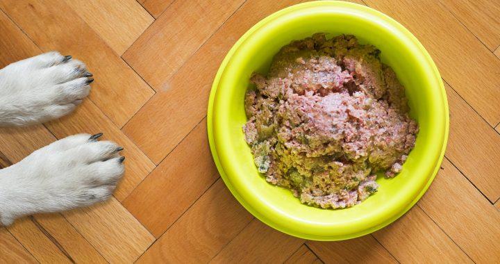 Japhy réinvente l'alimentation canine