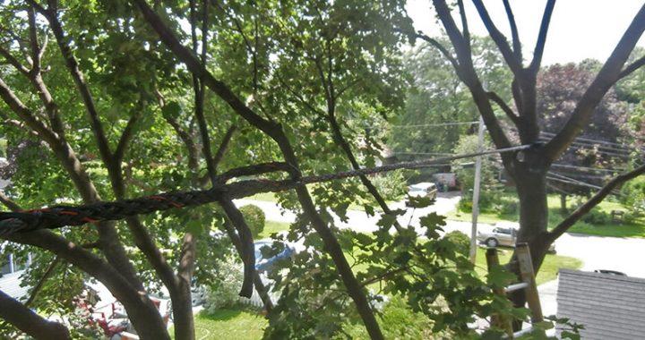Quels sont les points essentiels à retenir sur le haubanage d'arbre?