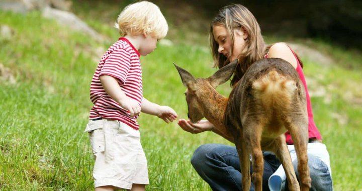 Passer un beau moment en famille en visitant un parc aux animaux Rhône-Alpes