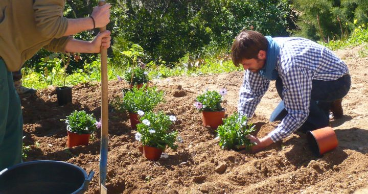 Aménagement du jardin : pourquoi choisir un gazon artificiel?