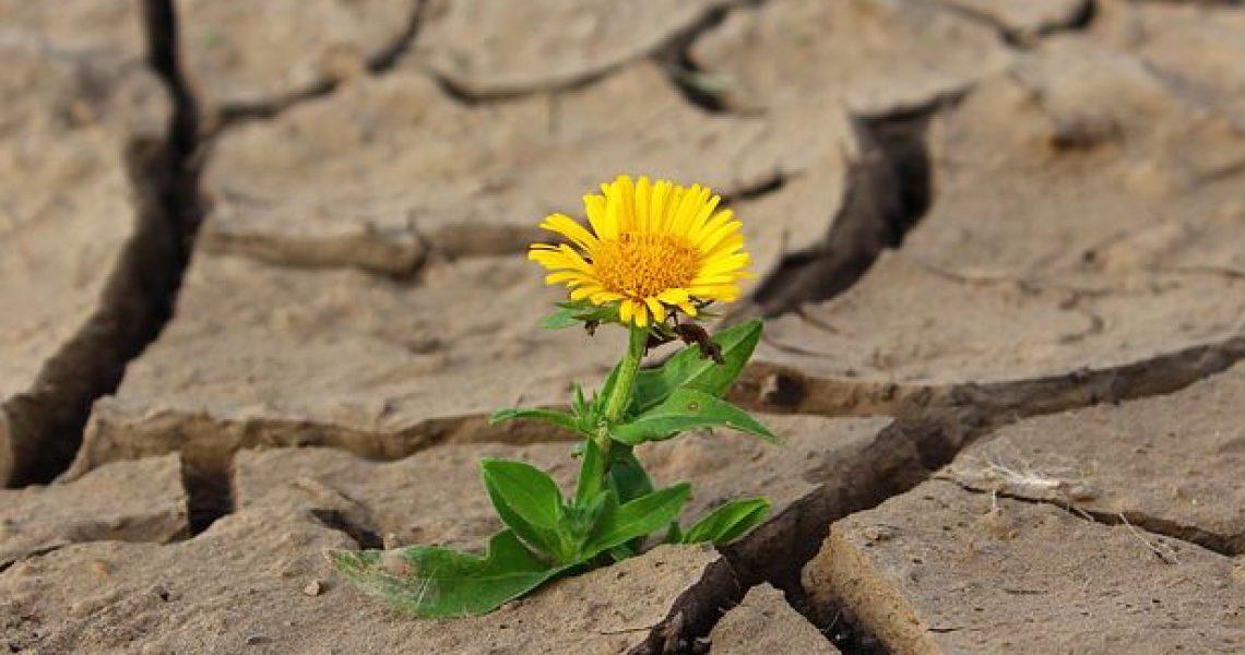 flower-887443__480